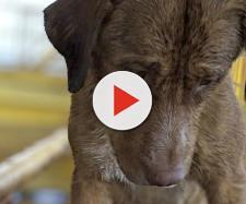 Cão é resgato perto da costa da Tailândia. (Reprodução/Facebook/Vitisak Payalaw)