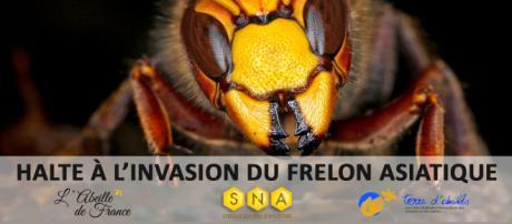 En quelques années, les frelons asiatiques ont détruit 300 000 ruches en France