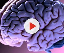 Usa, cervello di maiale 'riattivato' quattro ore dopo il decesso