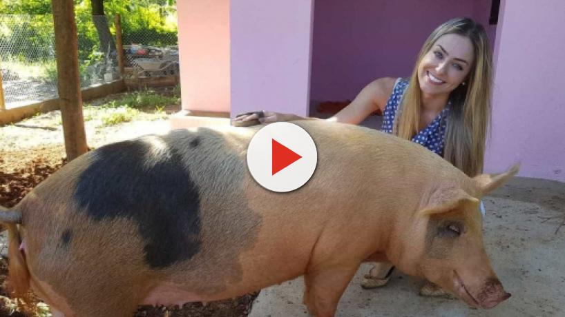 Campeã do BBB19, Paula é rejeitada por porca de estimação