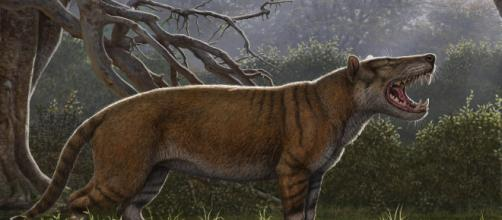 Simbakubwa, il 'leone gigante' più grande dell'orso polare - sapeople.com