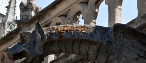 Le api di Notre-Dame sono sopravvissute al fuoco | PEOPLE.com - people.com