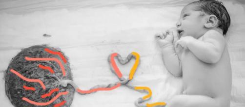 Formas de consumo da placenta. (Arquivo Blasting News)