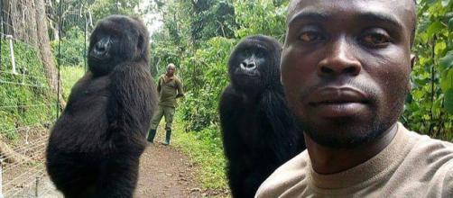 Ranger si fa selfie con i gorilla| The ... - themanpost.com