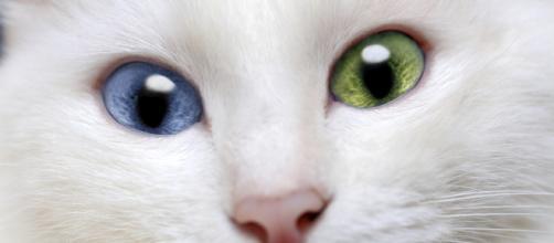 Gatos exóticos. (Arquivo Blasting News)