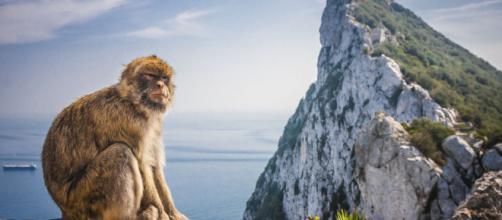 "Gibraltar podría ser considerada ""colonia"""