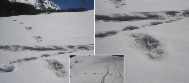 Esercito indiano dichiara di aver scoperto impronte dello Yeti - dailymail.co.uk