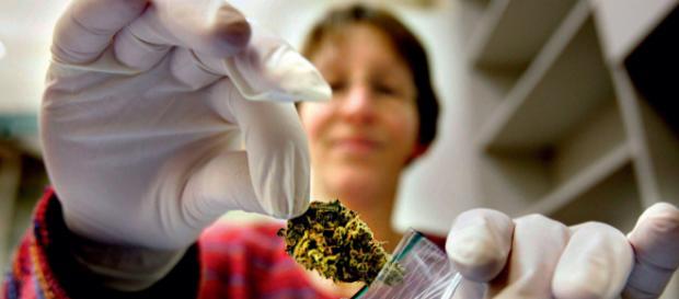Medizinalcannabis: Die Zahl der Anträge nimmt zu - aerzteblatt.de