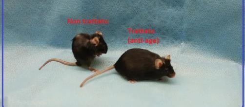 Alcune sostanze sono in grado di bloccare l'invecchiamento. Dopo anni di studi sugli animali, la prima conferma sull'uomo da uno studio clinico.