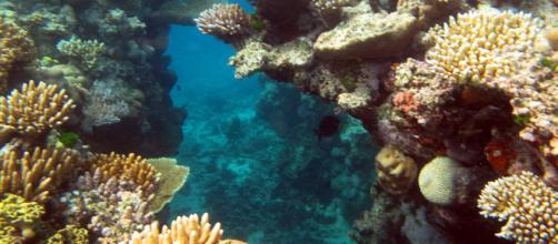 Great Barrier Reef 008. [Image source/Steve Evans, Wikimedia Commons]