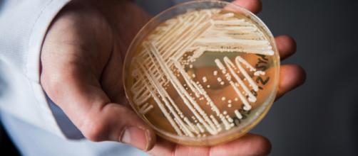 Candida Auris: il fungo killer che spaventa il mondo