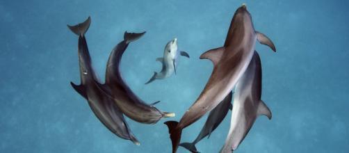 Las hembras de los delfines podrían sentir orgasmos