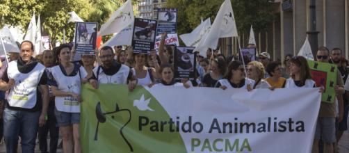PACMA lograría escaños en el Congreso de los Diputados