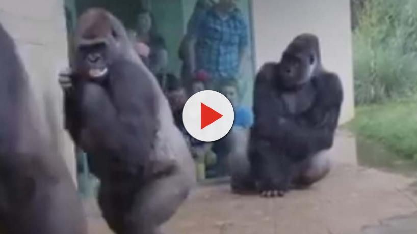 5 fun or strange videos and images of the animal world