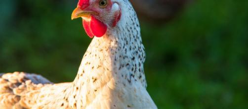 El gallinero de Cangas de Onís y la verdad sobre el caso