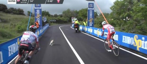 Un cane sul percorso mentre passano Conti e Masnada