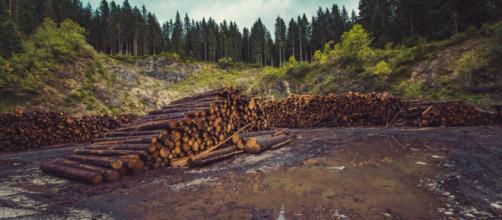 la déforestation, un monstre qui a toujours faim