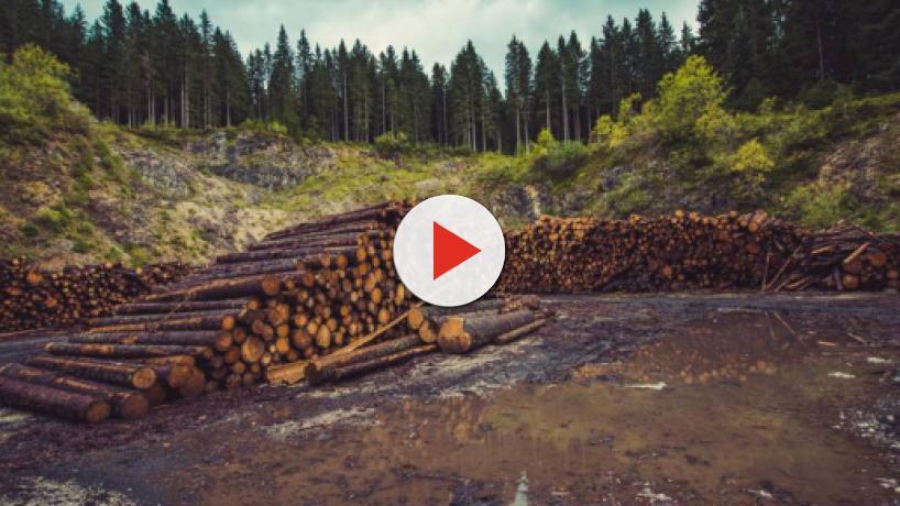 Monde : La déforestation, un monstre qui a toujours faim