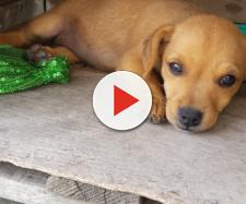 Lecce, non fa curare il cane malato di tumore: 10mila euro di multa al proprietario