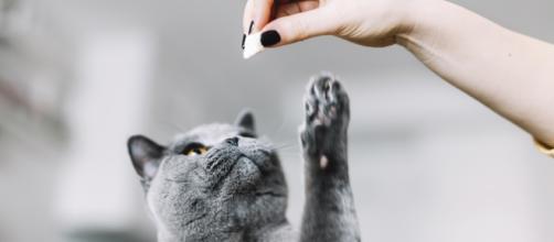 5 aliments interdits pour les chats - ohmymag.com