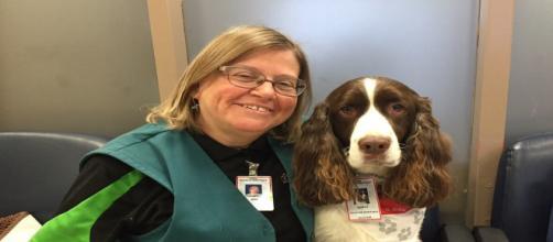 Murphy, il cane da terapia addestrato per far sentire meglio i pazienti