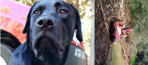 Bombeiros conseguiram encontrar o corpo do cão Barney. (Reprodução/ Corpo de Bombeiros)