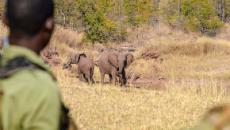 British soldier killed by elephant in anti-poaching operation in Malawi