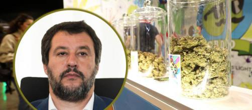 Matteo Salvini dichiara guerra alla cannabis e scatena la rivolta sui social