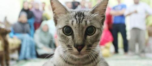 10 chats qui avaient décidé de faire rater une photo