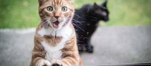 Ces chats qui aimeraient bien être à l'intérieur (credit photo MaximumWall)