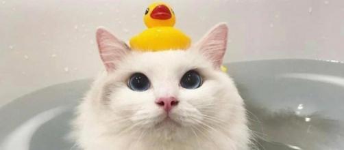 10 photos de chat complétement insolites