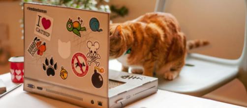 parfois les chats n'utilisent pas les cadeaux comme ils devraient