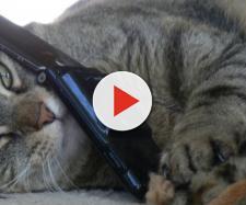 Résultats de la recherche chat telephone - ecurie-des-sablons.com