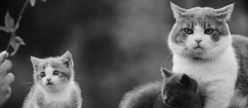 Fond d'écran : 2048x1152 px, animaux, chat, famille, Monochrome ... - wallhere.com