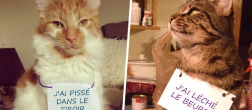 Top 10 des chats qui s'excusent pour leurs conneries, le meilleur ... - topito.com