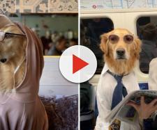 Cette photographe se met en scène avec son chien dans des ... - creapills.com
