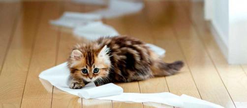 6 photos qui prouvent que les chats sont des diables (crédit photo Beauté & Santé)