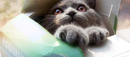 Fond d'écran : chaton, boîte, Chat cool, chat marrant, drôle ... - wallhere.com