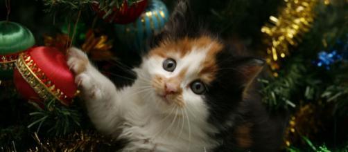 Un sapin de Noël plus résistant que les attaques de votre chat ... - chien-chat-tous-extras.com