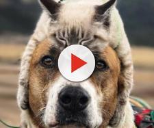 Cette blogueuse voyage avec son chien et son chat (crédit photo instagram @henrythecoloradodog)