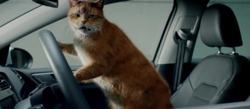 Insolite : Volkswagen craque pour les chats dans une publicité ... - tf1.fr