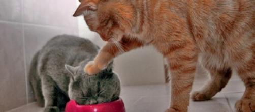 On ne s'ennuie jamais avec un chat. Crédits photos Overblog