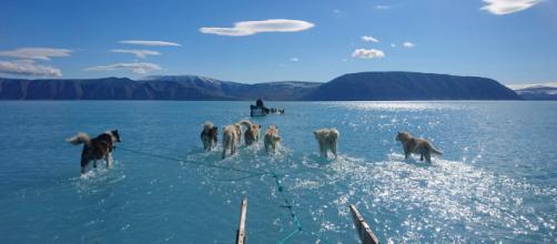 Fiordo de Inglefield Bredning, en Groenlandia. / STEFFEN OLSEN