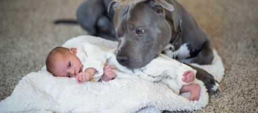 Un pitbull salva a un bebé de un incendio