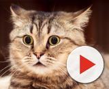 Fond d'écran : visage, animaux, les yeux, la nature, fermer ... - wallhere.com