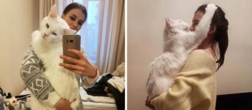 5 idées pour faire plaisir à son chat - Crédit photo Ipnoze
