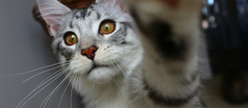 Fond d'écran : chat, les yeux, amour, asiatique, la photographie ... - wallhere.com