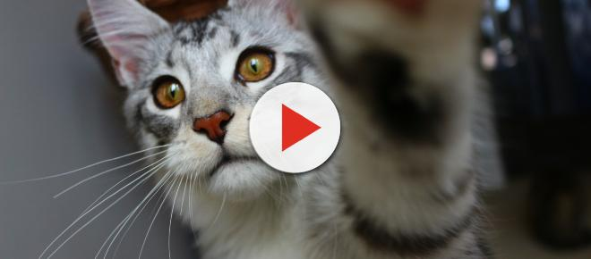 5 signes qui montrent qu'un chat aime son maître