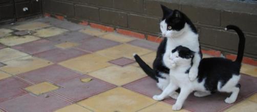 Ces photos de chat trop drôle - Crédit photo Bored Panda