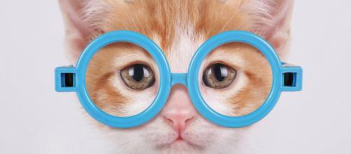 Cinq chats qui regrettent leur choios - crédit photo Grazia